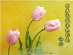 开在记忆深处的花