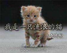 我是一只流浪的猫