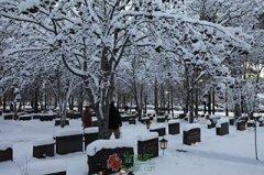 墓园之夜圣诞节故事