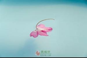 一朵花的重量