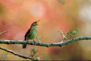 小鸟为什么歌唱
