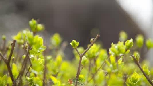 理想是现实土壤上开的花