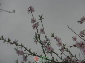 """这个叫""""霾""""的春天"""