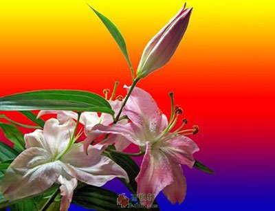叫醒世界的花开