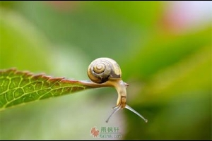 做只不妥协的蜗牛