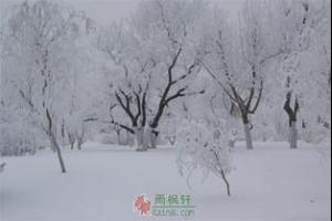 李久的冬天