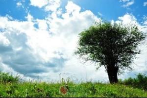 听风或是一棵树