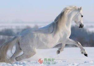 弄堂里的白马