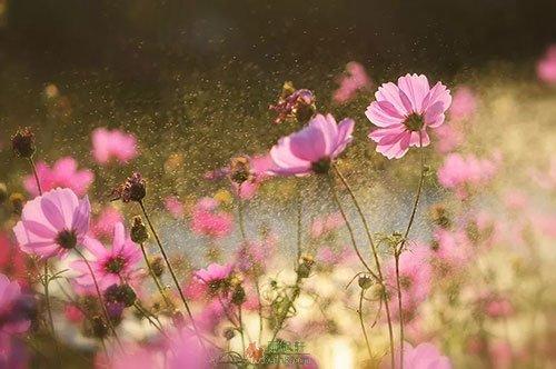 一朵花开的时间
