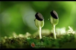 希望的种子