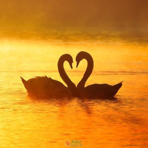 陪伴的浓度,决定爱的温度
