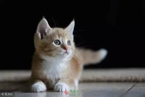 我与幸福之间,只差一只猫儿