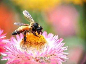 蜜蜂模式和苍蝇模式