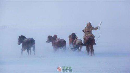 暴风雪后的马群