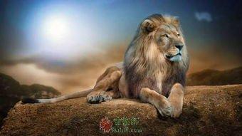 狮子和太阳