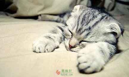 猫的生活哲学