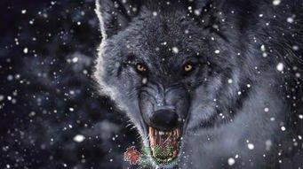 颤抖的狼齿