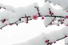 素雪莅临美梦里