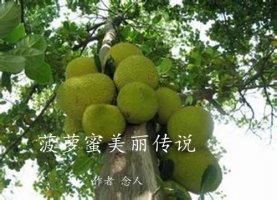 菠萝蜜美丽传说