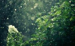 春雨泣声有谁懂。