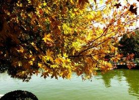 秋寂流过,抬首凝眸着秋的深邃。